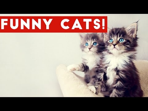 Cutest Cats And Kittens Compilation 2017 | Best Cute Cat Videos Ever: Funny Pet Videos presents a brand new weekly compilation featuring the cutest cat and kitten videos, clips, outtake, bloopers and moments caught on tape.  Send us a link to your video if you would like to see it in one of our compilations. https://docs.google.com/forms/d/1sR5Y6PyFGOpIMp6-j6XDAH3J07naG4ruRAfXyTOWZRE/viewform?c=0&w=1  Check out more Funny Dog Videos ► https://www.youtube.com/watch?v=7zZU-5uPHdQ&list=PLf6Ove6NWsVcM75fCjLk3i-9IkpCmPyXw&index=3  Funny Cat Videos ► https://www.youtube.com/watch?v=BoM9-bXzDjk&list=PLf6Ove6NWsVeM5MOVs_Yzj3AsV41DfQ9R&index=1  Click here to Subscribe ► https://www.youtube.com/user/tailsnfails?sub_confirmation=1  Welcome to Funny Pet Videos, a channel dedicated to cute, fluffy cats and curious, rambunctious dogs. We are here to fill your life with more furry and funny things the adorable friends in our lives do. Every Thursday, Friday, Saturday and Sunday we'll have a new compilation of the funniest home videos of cats, dogs, birds and all kids of animals being equally hilarious and adorable. Be sure the Subscribe to our channel to never miss one! So sit back, relax and have a laugh on us.   For licensing information contact us at licensing@collabcreators.com. We'd love to have your furry friend on our channel!