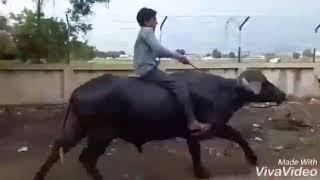 Hath Ma Chhe Whiskey   Jignesh Kaviraj   Gujarati Song   Raghav Digital