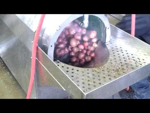 Vegetable Washer - Potatoes