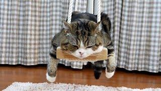 ブランコで寛ぐねこ。Maru relaxes on the swing.