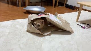 身軽になって素早くなった猫がかわいい   A cats that are light and quick is cute .