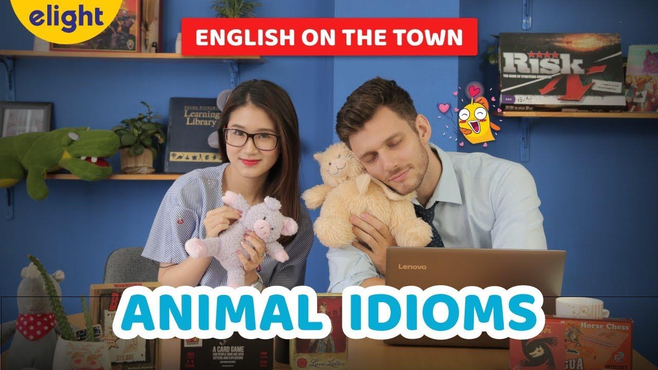 [Elight] Học tiếng Anh: Thành ngữ về động vật   Animal Idioms   English on the Town