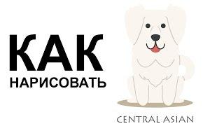 Собаки поэтапно карандашом. КАК НАРИСОВАТЬ СОБАКУ(Как нарисовать собаку поэтапно карандашом для начинающих за короткий промежуток времени. http://youtu.be/nijAeG25mJg..., 2015-06-25T08:58:17.000Z)