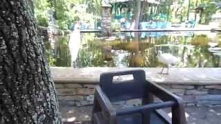 Disney Vacation 2014 Day 5 Part 2: Animal Kingdom/ Epcot Thumbnail