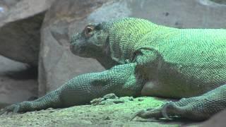Zoo de Thoiry : de nouveaux pensionnaires au vivarium