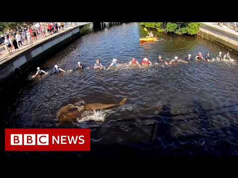 Human chain rescues stranded dolphins - BBC News