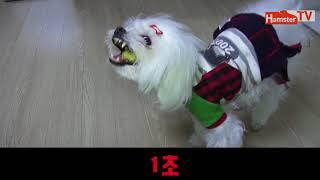 [말티즈]130탄.강아지 심장사상ᄎ…