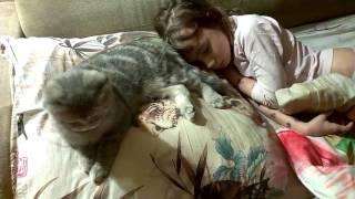 Где любит спать котёнок