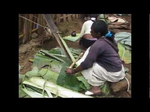 29102010 Making kocho,  false banana (enset) bread.