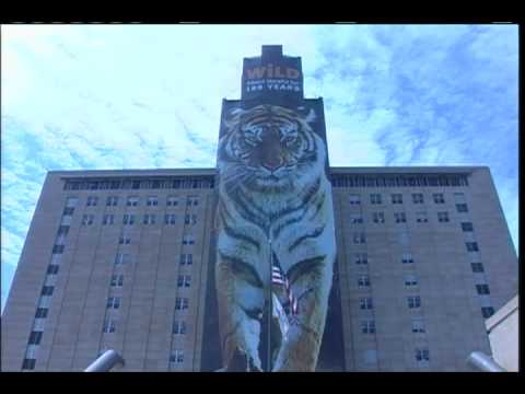 Mutual of Omaha tiger building wrap