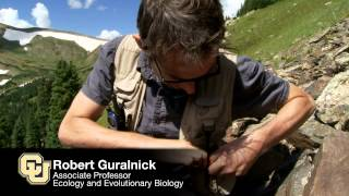 CU study: pikas holding their own in the Southern Rocky Mountains