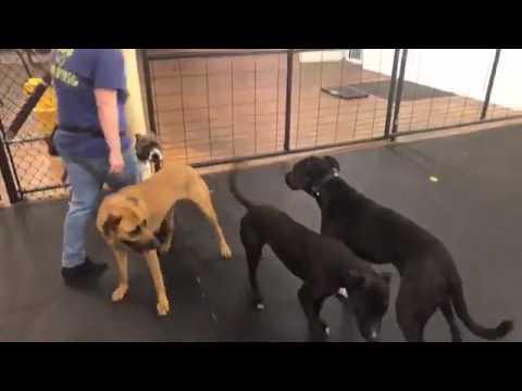 Dog Training | Advanced Dog Obedience | Solid K9 Training Dog Training