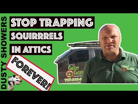 Stop Trapping Squirrels In Attic's Forever - Palm Harbor, FL