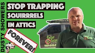 Stop trapping squirrels in attic's forever