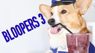 FUNNIEST BLOOPERS - Topi the Corgi