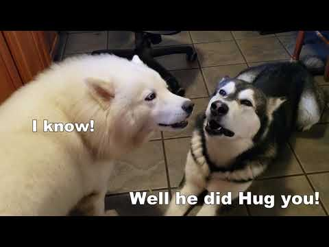Funny Dogs Argue | Who's The FAVORITE | Subtitles