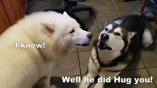 Funny Dogs Argue   Who's The FAVORITE   Subtitles