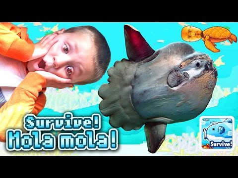Dad & Chase play SURVIVE! MOLA MOLA!   |  a Doofy Fish Adventure   (iOS Face Cam Gameplay)