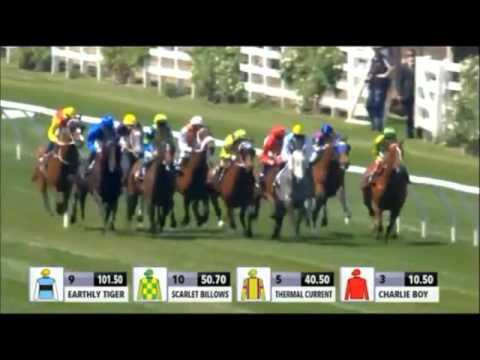 Chautauqua Gilgai Stakes 2015