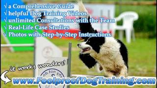 Canine Training Solutions Llc - Dog And Puppy Training