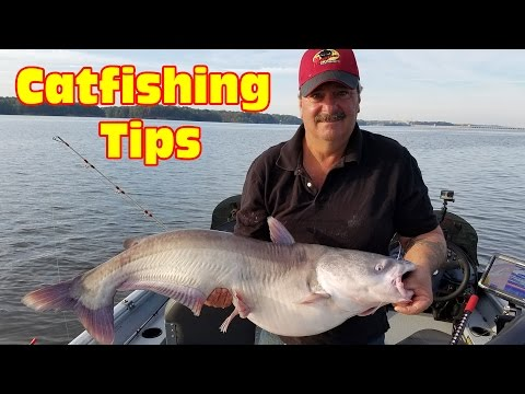 Tips for catching  blue catfish in a lake: Use this Multi Rig Technique to Catch Big Catfish