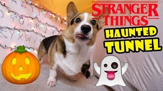 CORGI'S Stranger Things Halloween Haunted House! || Life After College: Ep. 656