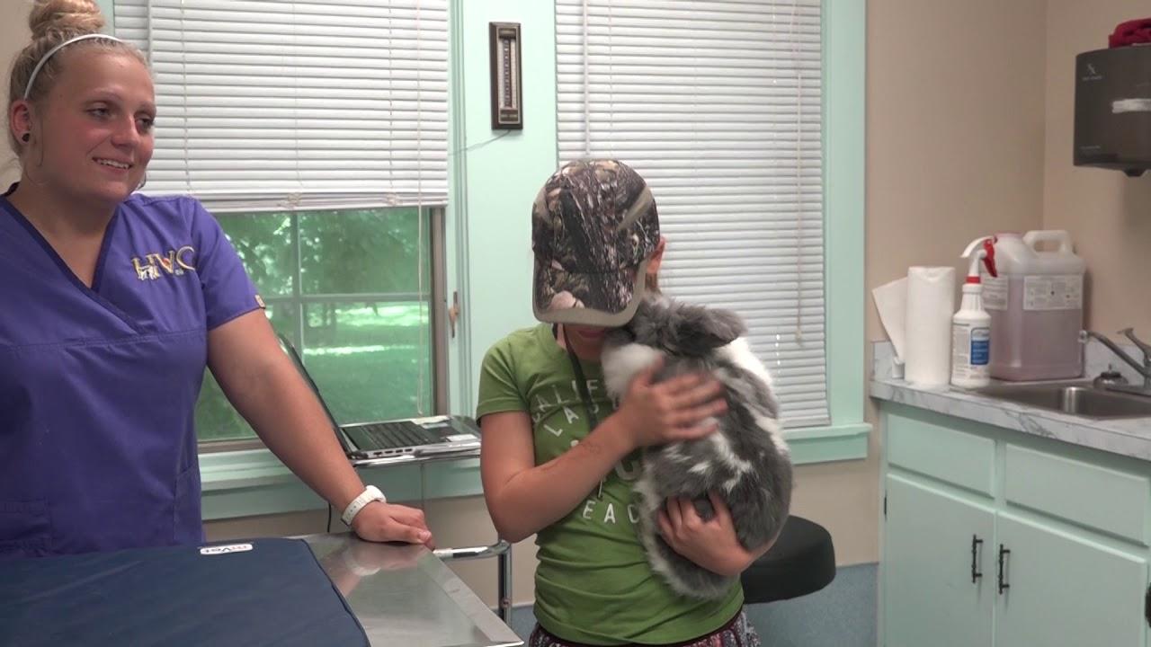 Highland Veterinary Clinic | Evansville IN Vet