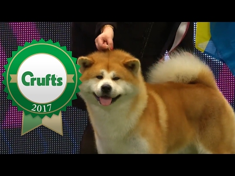 Eukanuba World Challenge Opening Ceremony | Crufts 2017