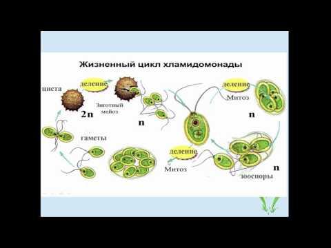 Решение задач части с биология егэ математика 2017 профильный задачи с решением