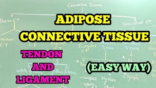 ADIPOSE CONNECTIVE TISSUE / TENDON AND LIGAMENT (EASY WAY)