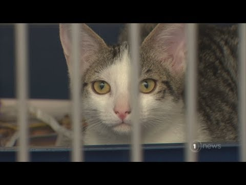 SPCA inundated with thousands of kittens and puppies, some abused, all unwanted