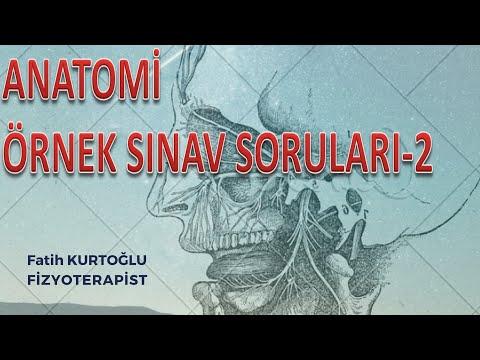 Anatomi Öğreten Örnek Sınav Soruları-2 | önlisans-lisans