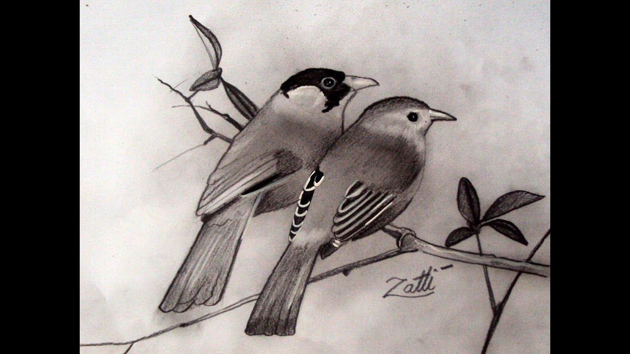 Como Desenhar Passarinhos