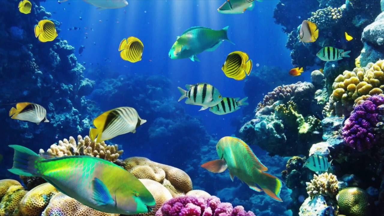 55 Wallpaper Pemandangan Bawah Laut Gif