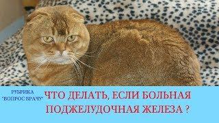 02.02.18 Болезни поджелудочной железы у кошек