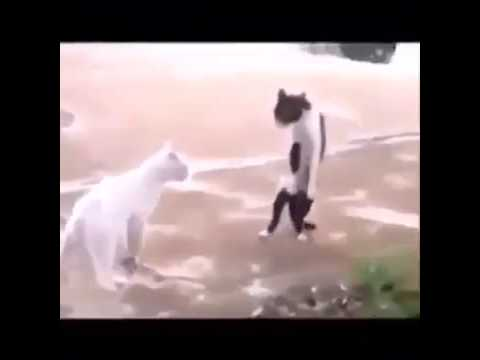 michael katze