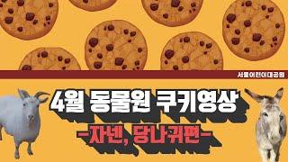 서울어린이대공원 4월 동물원 쿠키 영상(자넨, 당나귀편)썸네일
