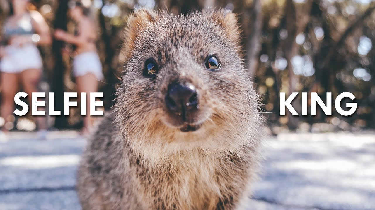 quokkas-the-happiest-animals-on-the-internet