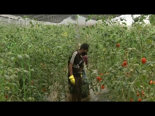 Israeli Agricultural Technology Helping Farmers in India
