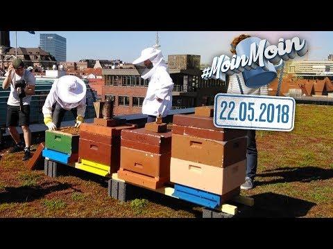 Do it yourself Honig - Bienen auf dem Dach halten | MoinMoin mit Sofia, Benjamin & Jean-Baptiste