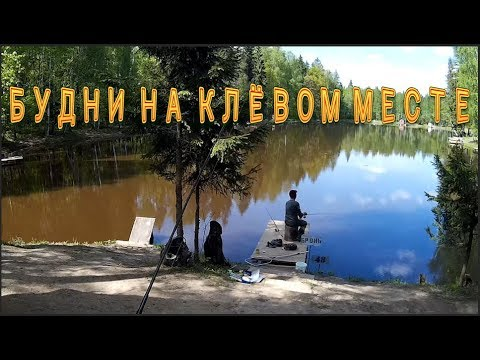 Рыбалка на КРХ Клёвое место. Карп, форель, осётр