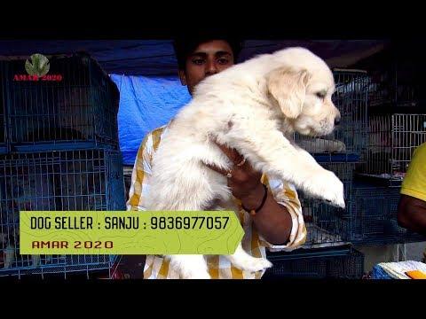 CUTE DOG PUPPY SELLER AT GALIFF STREET PET MARKET KOLKATA | 30TH DEC 2018 | SELLER CONTACT NO