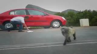 Смешные обезьяны Приколы про обезьян Funny monkeys #3 (Отличное смешное видео с обезьянкам
