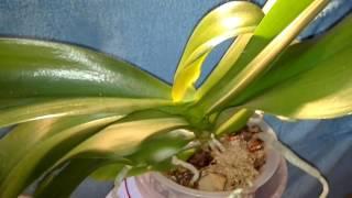 Победила Клещей на Орхидея 100% результат....