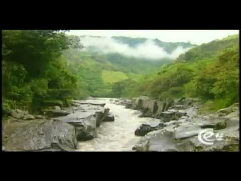 Biodiversidad de las regiones youtube - Aromatizantes naturales para la casa ...
