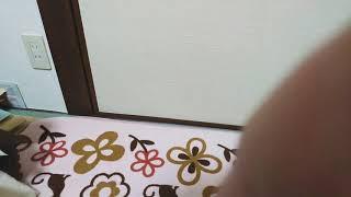 蒙古タンメン中本さんの旨辛焼きそば限定品セブンイレブンにて、販売中.