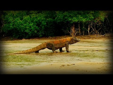 Komodo and Sumatra: Land of Dragons (full documentary)