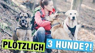 WIESO haben wir 3 HUNDE? Urlaub mit Hund | Gassi Hunde Vlog