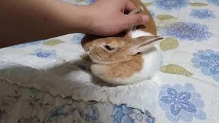 주인과 놀아달라는 토끼