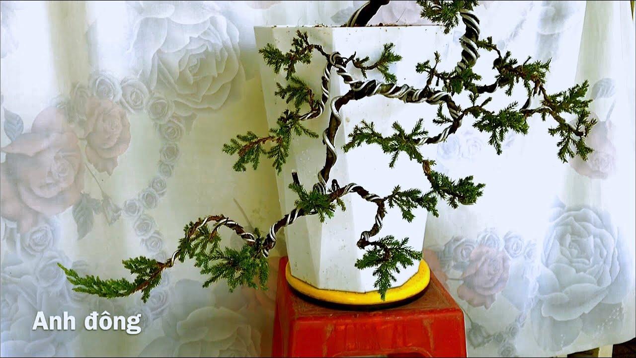 Uốn cây bonsai giá 100 k
